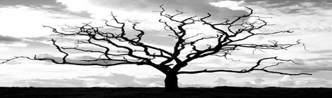 pohon-tua-1024x768